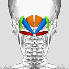 Physical therapy for headaches